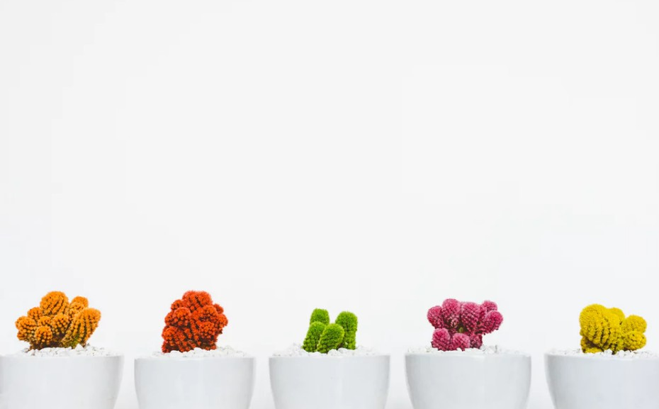 Various colors of succulent cacti against white background
