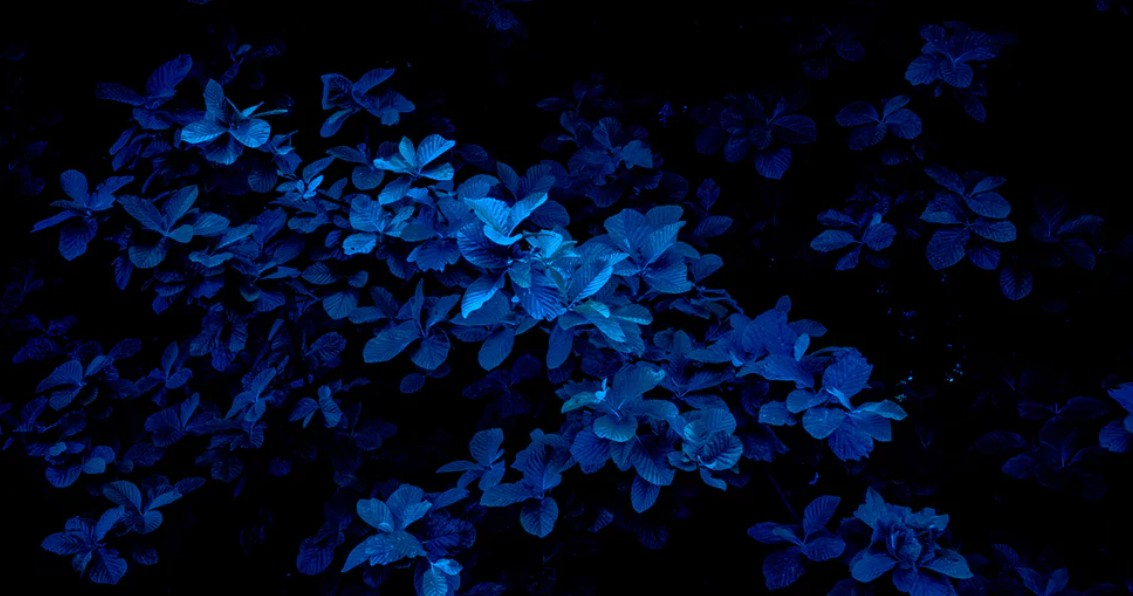 Plants in shades of blue