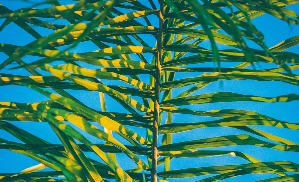 Tropical palm leaves with turquoise background