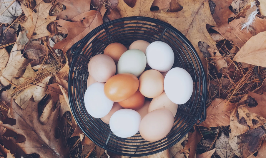 A basket of eggs on fall leaves