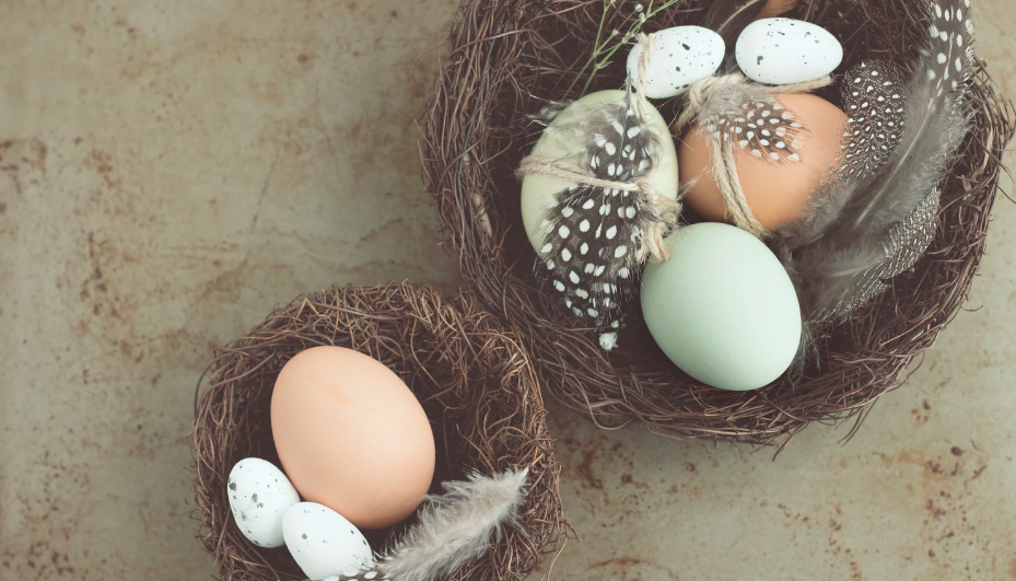 Blue and neutral colored eggs